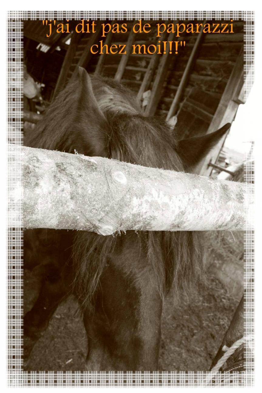 Vie de cheval